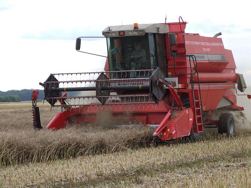 RZD Baborówko-Doświadczenie nawozowe w kukurydzy
