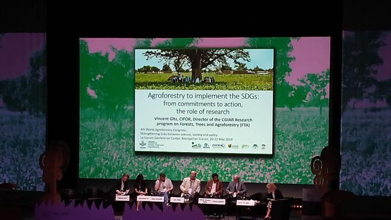 4 Światowy Kongres Agroleśnictwa